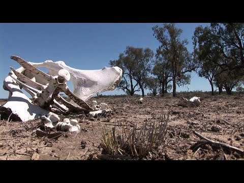 Heavy toll as Australian farmers struggle through drought