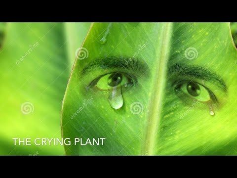 The Crying Plant | Save Environment | heART Of Student