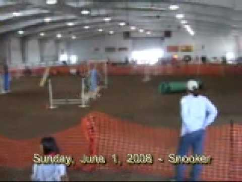 Agility Dog Shows In Ct