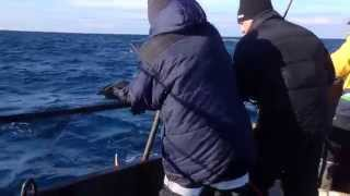 Codfish fishing, Kola Peninsula