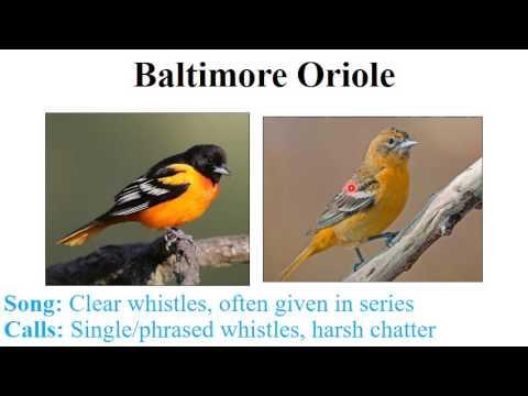 CEAP birds - cardinalids, blackbirds, and finches
