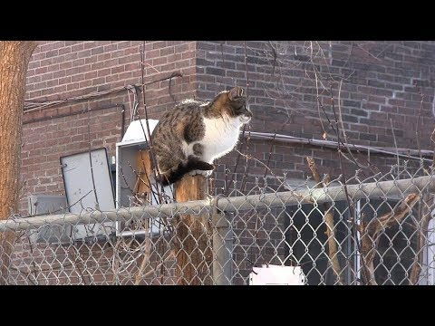 Cat shelters part of group's effort to sterilize Montreal strays