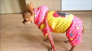 Покупки для собак на Алиэкспрессе -  Зимняя одежда для собак -   обзор примерка покупок