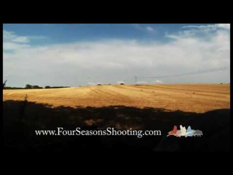 Pigeon Shooting-South Africa Pigeon shooting £175 per day 2018