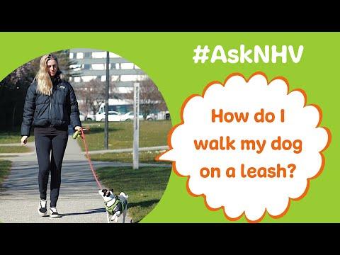 #AskNHV: How Do I Walk My Dog On A Leash?