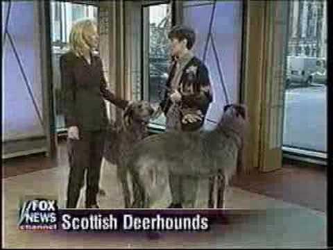 Ellen Bonacarti with Scottish Deerhound