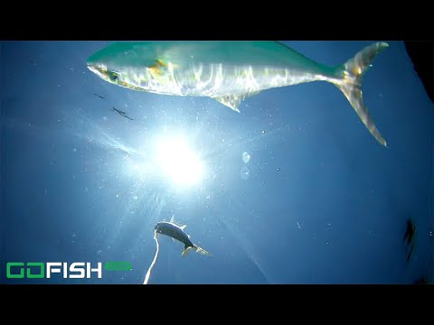 Saltwater Fishing For Amberjack With GoFish Cam
