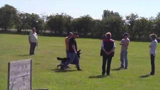 Schutzhund 3 Obedience (score 98) Vongalanberg Kai And Travis Foster.flv
