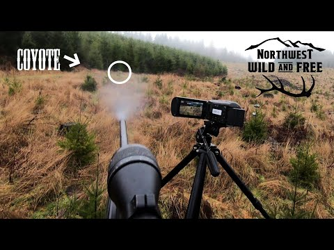 TWO COYOTE HUNTS GONE WRONG! with Northwest Wild and Free