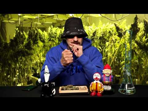 Strain Review W/ Dr. Greenthumb - Cherry Pie | BREALTV