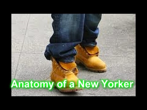 Anatomy of a New Yorker