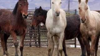 PVC 1-20-12: Wild Horses & Burros at PVC