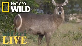 Safari Live - Day 147 | Nat Geo Wild