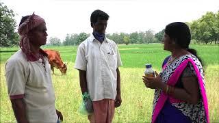 Control of stem borer and BLB disease management in paddy cultivation_Odia_DoA_Keonjhar_Odisha