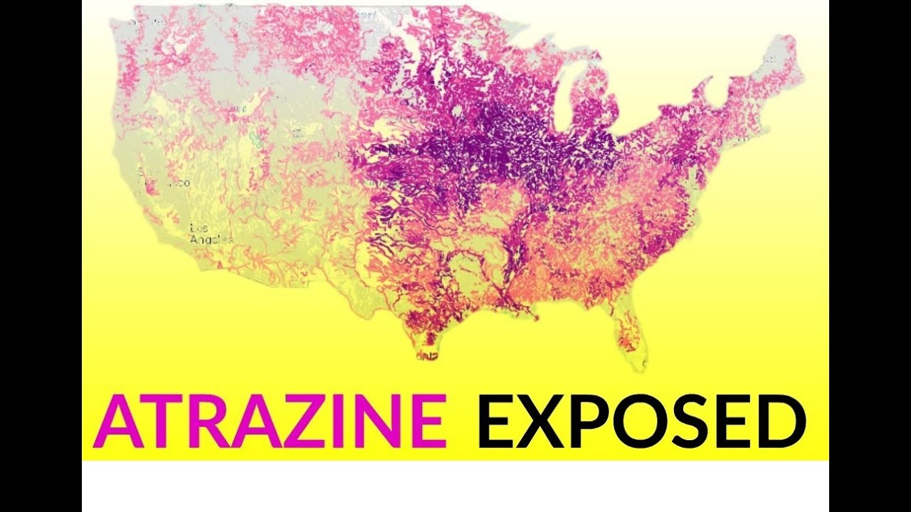 Atrazine causes homosexuality statistics