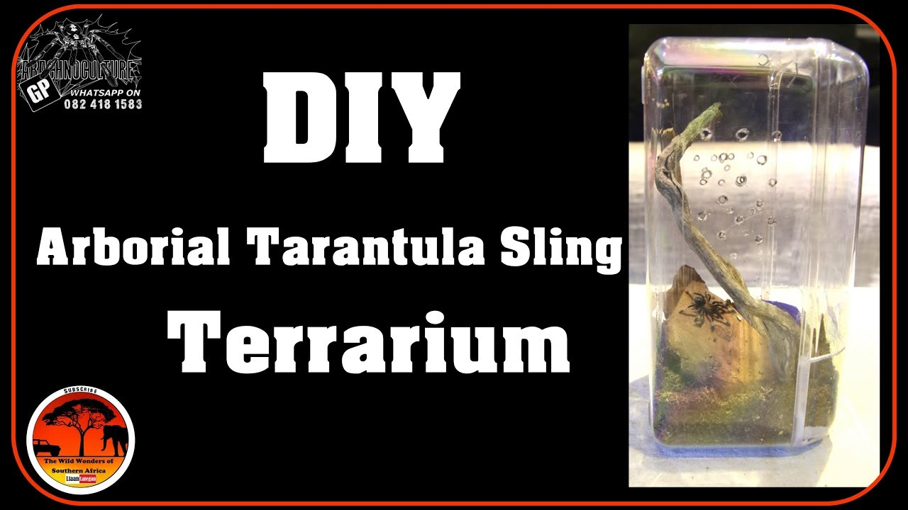 Diy Arboreal Tarantula Sling Terrarium Build Youtube