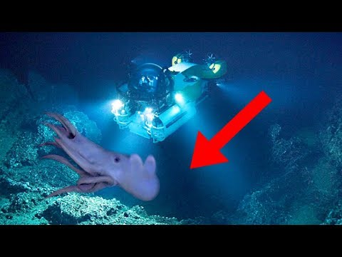 Most TERRIFYING Creatures In The Mariana Trench!