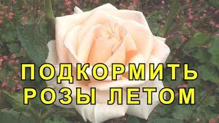 Чем Подкормить Розы. Внекорневые Подкормки для Роз.