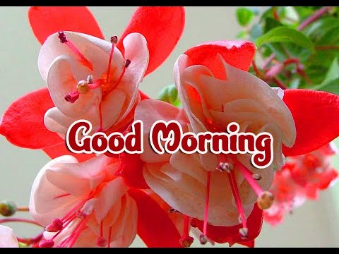 Good Morning with Flowers HD Images Video