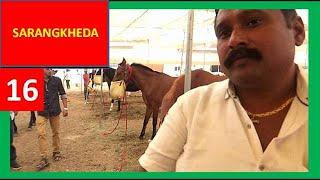 घोडा बाज़ार : Indian Horse Market Trading : sell horses online : Sarangkheda Horse Fair 2017