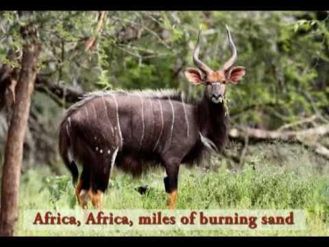 Africa Song for Kids | Meet African Animals