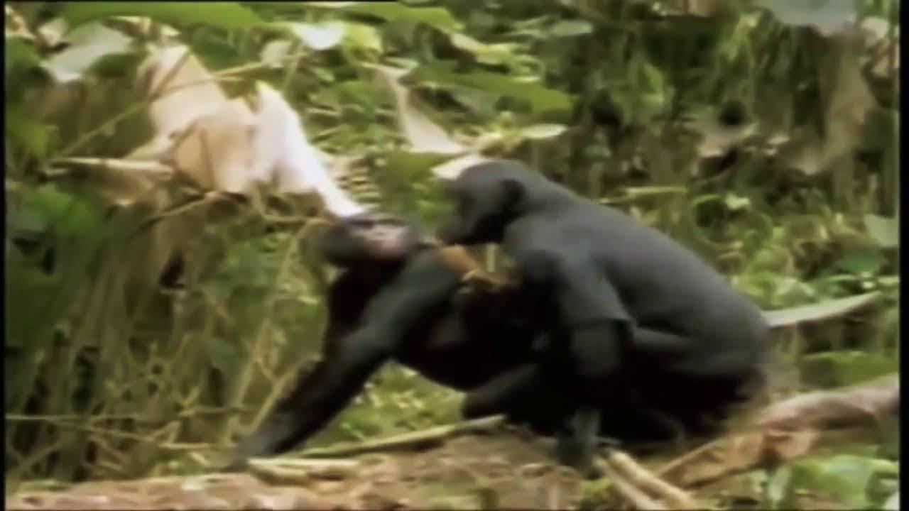 Monyet Kawin Lucu Bikin Ngakak