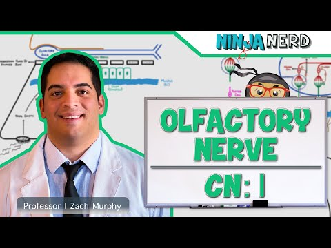 Neurology | Olfactory Nerve | Cranial Nerve I