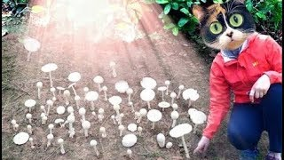 How to Grow Mushrooms At Home. Experiment