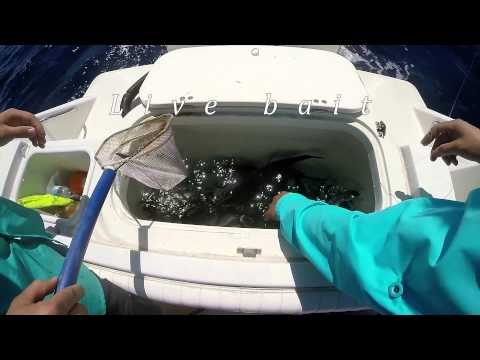 GoPro Offshore - Grand Isle - (No trophy fish)