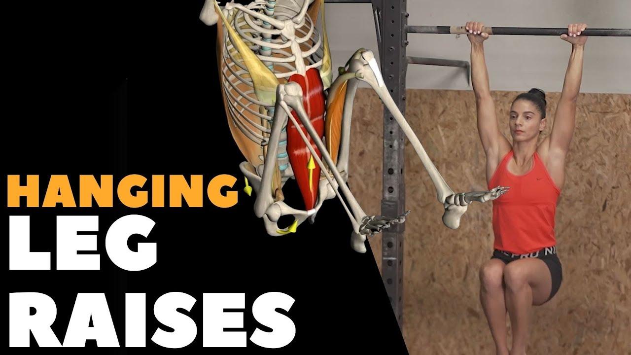 Hanging Leg Raises I Anatomical Analysis