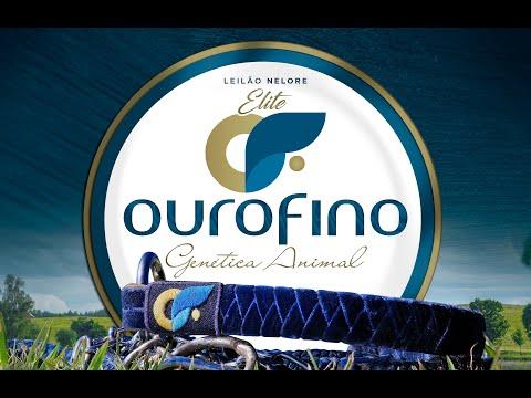 Lote 21   Royale OuroFino   OURO 2973 Copy