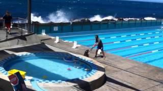 """Chết cười xem sư tử biển """"xâm lược"""" bể bơi"""