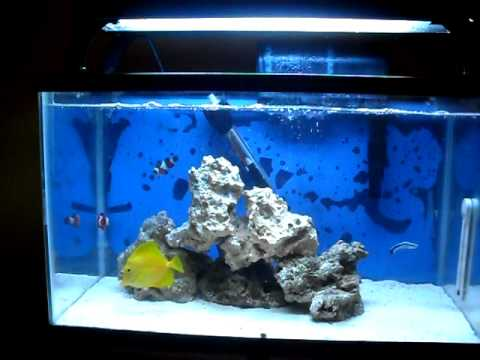 10 gallon saltwater tank youtube for Saltwater fish for 10 gallon tank