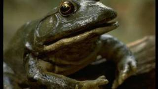From the Brothers Grimm: The Frog King Trailer