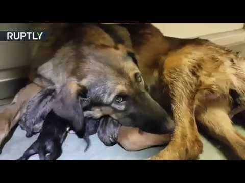Homeless dog gives birth to 9 puppies in Moscow Metro carriage