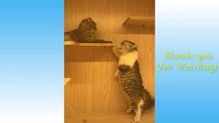 FUNNY AND CUTE ANIMALS COMPILATION