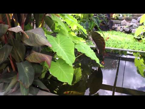 Outdoor Tropical Plants: Part 1