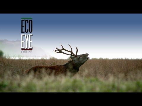 """Restoring Nature"" Full Episode Eco Eye Series 16"