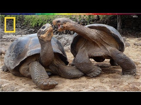 National Geographic | Turtle Vs Tortoise | BBC Documentary