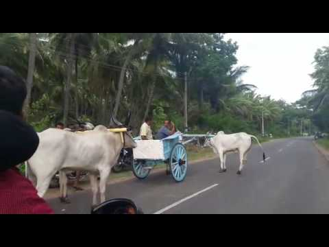 Thirumurthimalai rekla 2016 adi amavasai