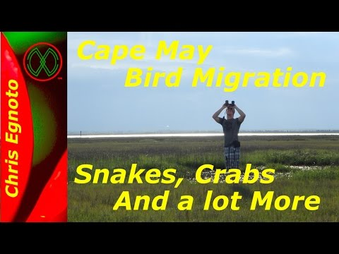 Cape May - Migrating birds, snakes, horseshoe crab and more.