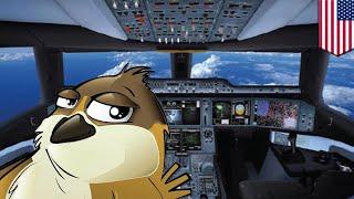 Video Burung di pesawat: burung gereja dalam kokpit pesawat Delta terpaksa putar balik - TomoNews download MP3, 3GP, MP4, WEBM, AVI, FLV Agustus 2018