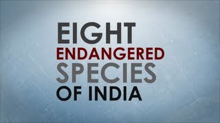 Eight endangered species of India
