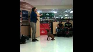 Oso Learning Leave It At Petsmart Obedience School