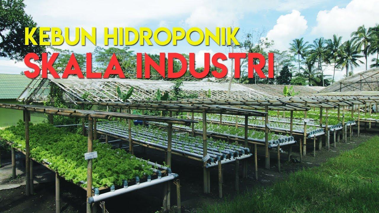 Kebun Hidroponik Skala Industri Ft Pak Iqbal