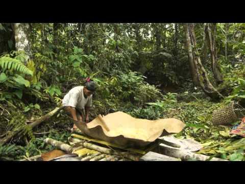 Making Sago at Long Beruang, Sarawak, Malaysia