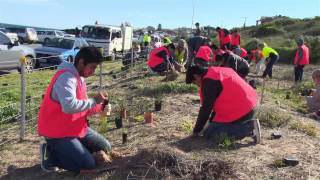 National Tree Day at Port Noarlunga (Urdu News)