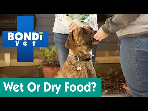 How Much Wet And Dry Food For A Dog? | Ask Bondi Vet