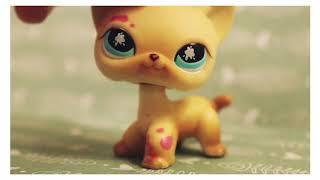 - LPS: Все мои стоячие кошки -