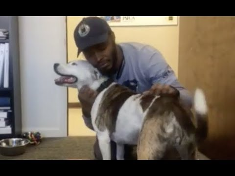 LIVE: Man Reunites With Dog He Trained in Prison After a Year Apart | The Dodo LIVE